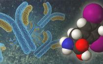 Антитела к рецепторам ТТГ — что это такое? Норма тиреотропина, анализ и расшифровка