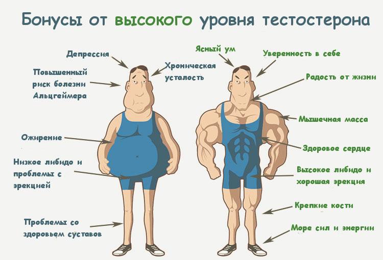 Разница между низким и высоким уровнем тестостерона
