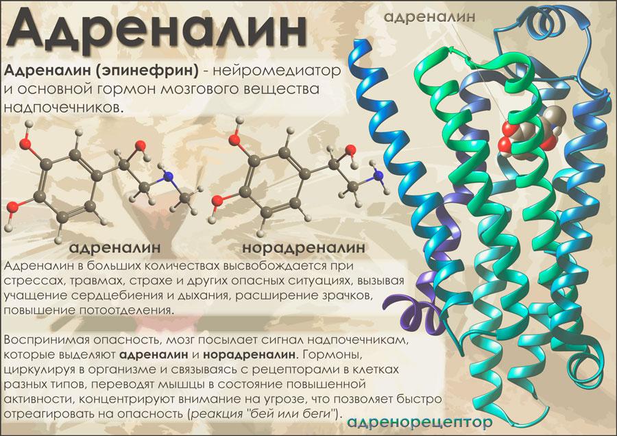 Адреналин и норадреналин