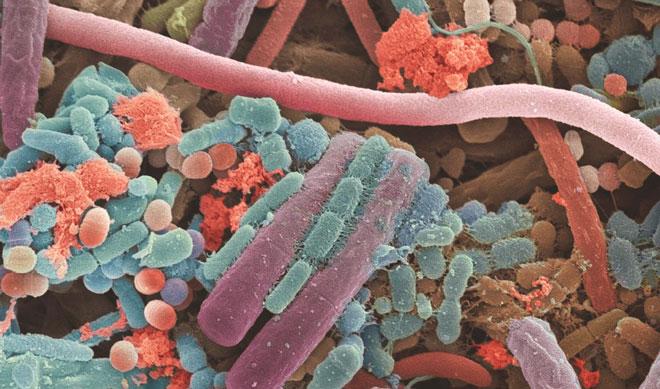Микроорганизмы под микроскопом