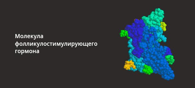 Молекула фолликулостимулирующего гормона