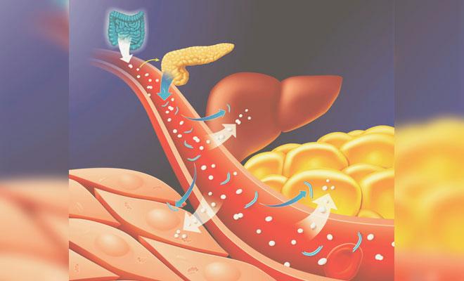 Обмен сахара в организме
